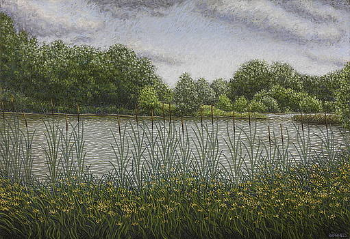 Ponds of Phalempin in summer, bulrush and graminaceous by Raphael Seygnovert
