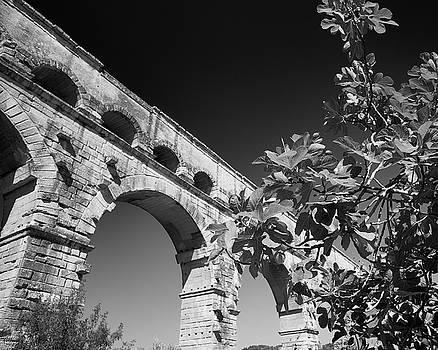 Pont du Gard and Fig Tree by Richard Goodrich