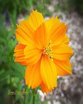 Pontoon Orange Flower by Zarya Parx  Studio