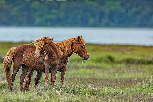 Pony Couple by Dennis Clark
