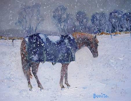 Pony in the Snow by Bonita Waitl