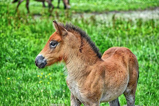 Pony by Ingrid Dendievel