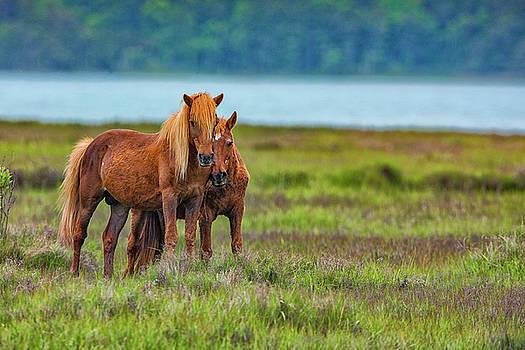 Pony Love by Dennis Clark