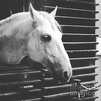 Ponytail Horse by Donato Iannuzzi