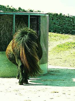 HweeYen Ong - Ponytail