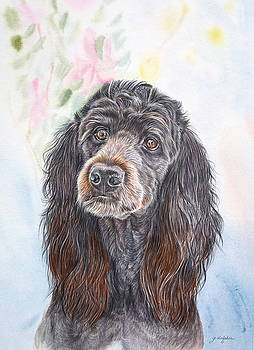 Poodle Mix  by Gail Dolphin