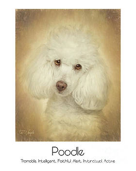 Poodle Poster by Tim Wemple