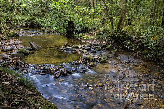 Barbara Bowen - Pool at Cooper Creek