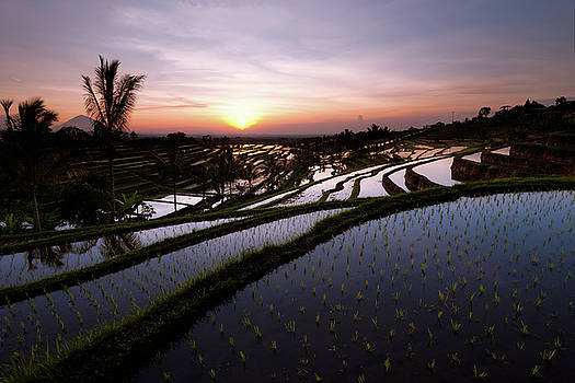 Pools of Rice by Andrew Kumler
