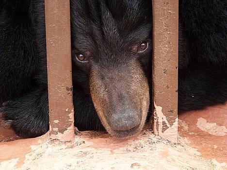 Poor Bear by Sherri Ward