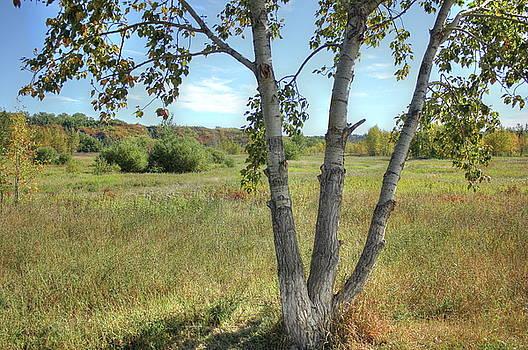 Poplar Tree in Autumn Meadow by Jim Sauchyn