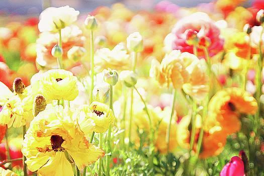 Poppies 2 by Megan Swormstedt