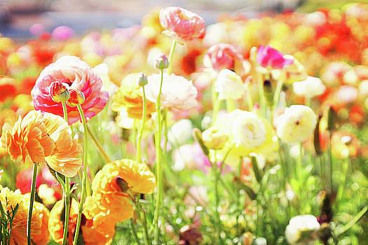 Poppies 3 by Megan Swormstedt