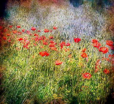 Poppies by Alan Mattison