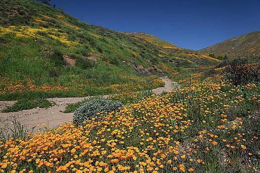 Cliff Wassmann - Poppies along Riverbed