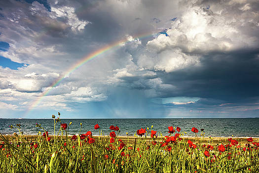 Poppies and rainbow by the sea by Evgeni Dinev