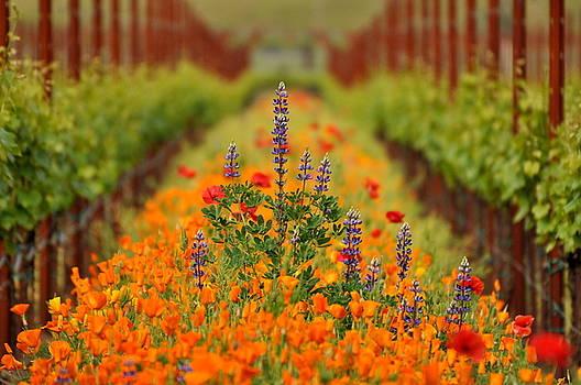 Poppies and Wildflowers in Vineyard by Pamela Rose Hawken
