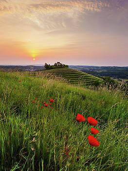 Poppies burns by Davor Zerjav