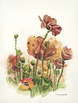 Poppies by E E Scanlon