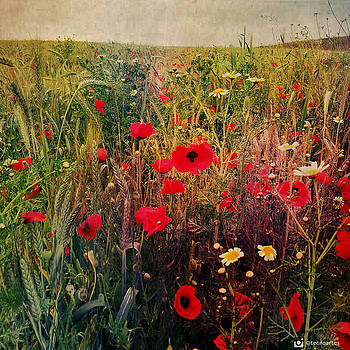 Poppies Fiel by Miguel Angel