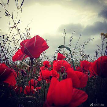 Poppies field and Clouds by Miguel Angel
