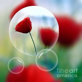 Poppies in the bubble by Rui Militao