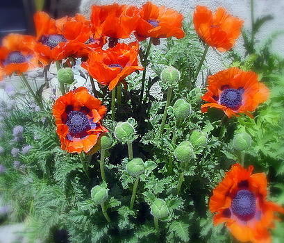Poppies by Jo Anna McGinnis