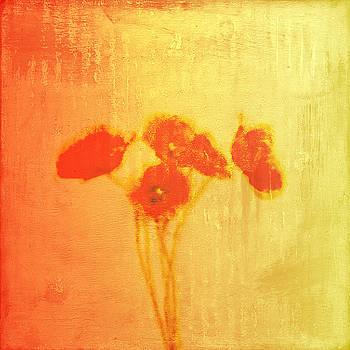 Poppies by Jude Reid