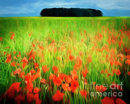 Poppies of the Cotswolds by Edmund Nagele