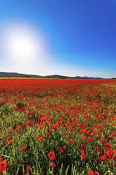 Scott Masterton - Poppies