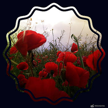 Poppies together  by Miguel Angel