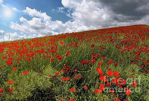 Poppies UK by Beth Jacobs