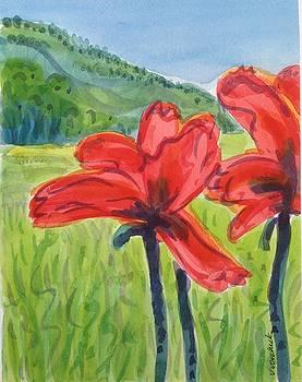 Poppies by Virginia Vovchuk