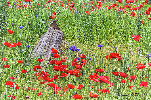 Poppies with a Cardinal by Bonnie Willis