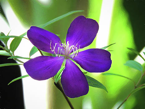 Poppin Purple Flower by Penny Lisowski