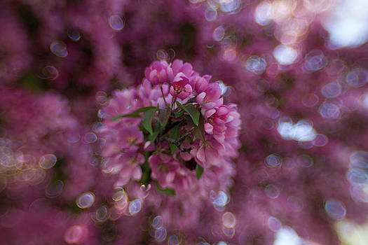Popping Pink by Sharon Wilkinson
