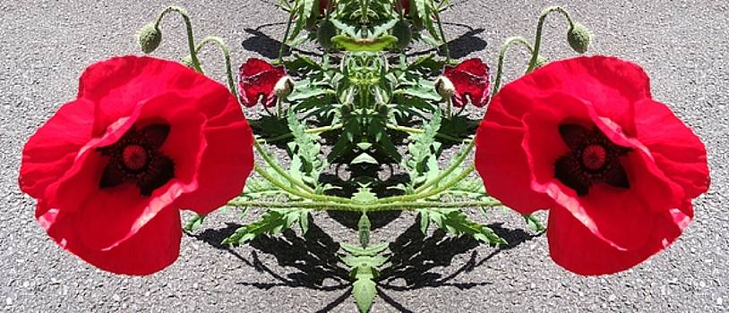Poppy 1149 mirror image by Julia Woodman