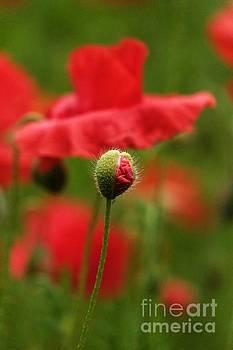 Poppy -5- by Issabild -