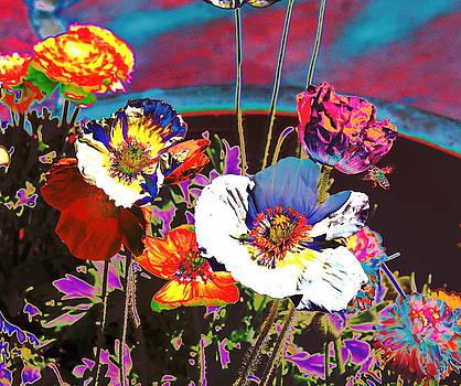 Poppy Abstract 3 by M Diane Bonaparte