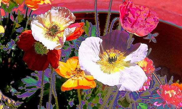 Poppy Abstract by M Diane Bonaparte