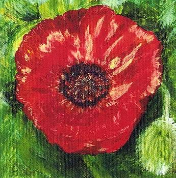 Poppy by Deb Stroh Larson