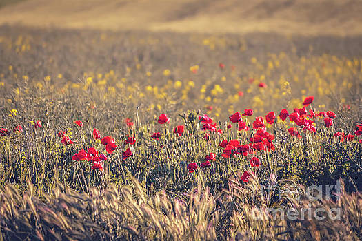 Poppy field by Claudia M Photography