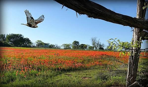 Poppy Field by Dale Paul