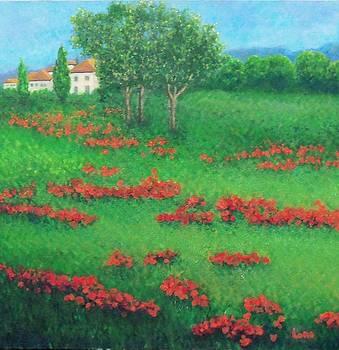 Poppy Field in Italy by Lore Rossi