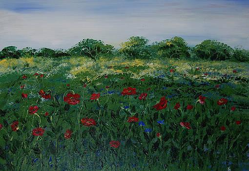 Poppy field by Katerina Atapina