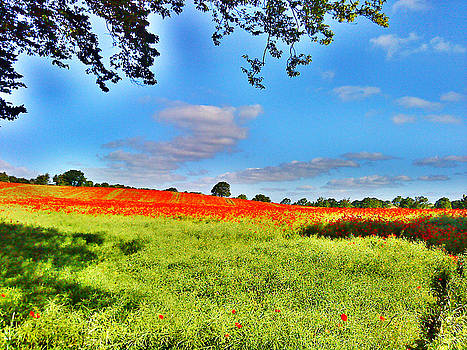 Poppy field by Sitara Bruns