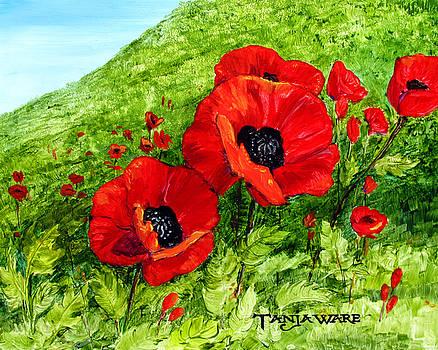 Poppy Field by Tanja Ware