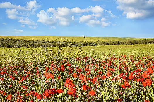Poppy Fields by Marion McCristall