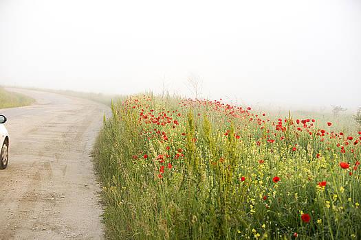 Poppy flower guarding the road by Adrian Bud