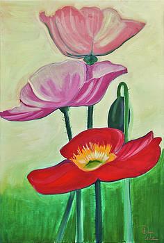 Poppy Flowers by Denise Jo Williams